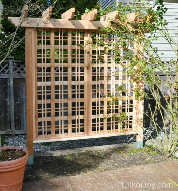Beautiful Garden Trellis Climbing Roses Vines
