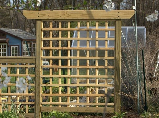 Building Arbor Style Trellis Growing Home Garden