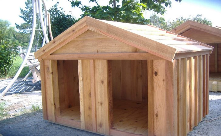 Diy Dog House Beginner Ideas