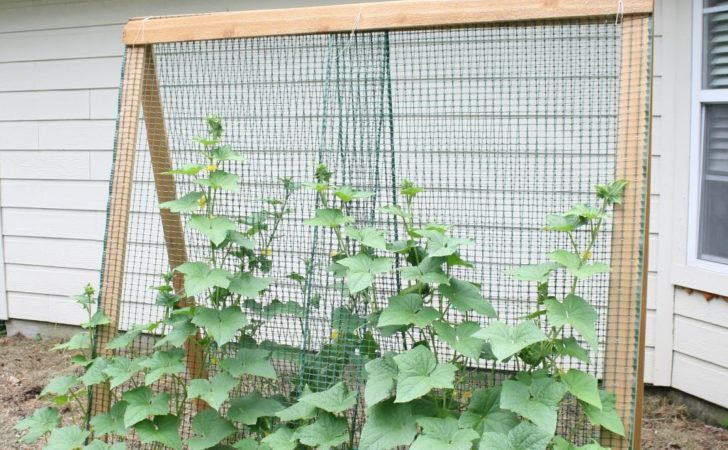 Rare Breed Farms Building Cheap Garden Trellis