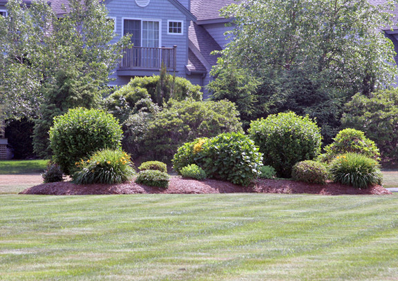 Things Hate Your Yard Whole Life Gardening